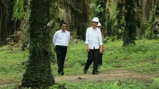 Pencanangan B-20 oleh Presiden Jokowi sudah tepat, dan kita memiliki lahan kelapa sawit terbesar di dunia. (foto : ist)