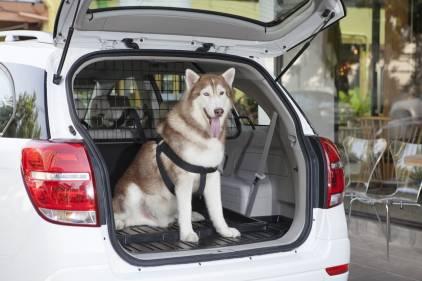 Membawa hewan peliharaan dalam perjalanan menggunakan mobil butuh perlakuan khusus. (foto: Chevrolet)
