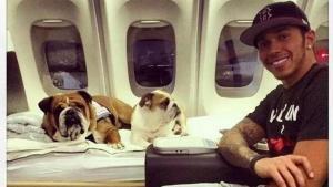 Lewis Hamilton di jet pribadi bersama anjing kesayangan. (Foto: dogalize)